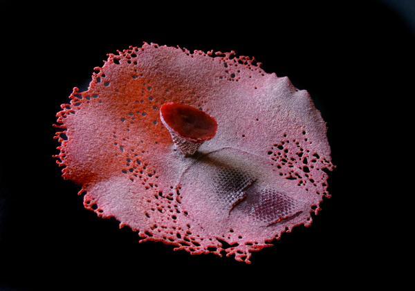 Mare Saare - Fragiil XXX (2010, klaas pâte de verre, vormi- ja liivalesulatus, läbimõõt 340 mm)