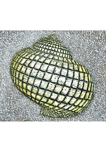 Siim-Tanel Annus – Shells (2009, acrylic on canvas, 50 x 42 cm)