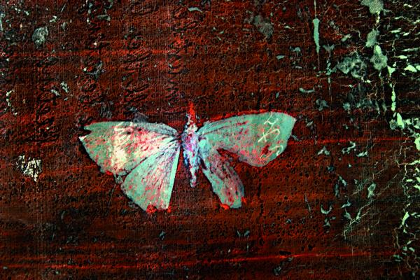 Mare Saare - Japan: Butterfly (2011, glass, digital, print, fired, laminated, 550 x 400 mm)