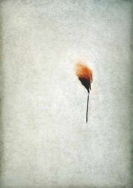 Virge Jõekalda - My garden I (2001, drypoint)