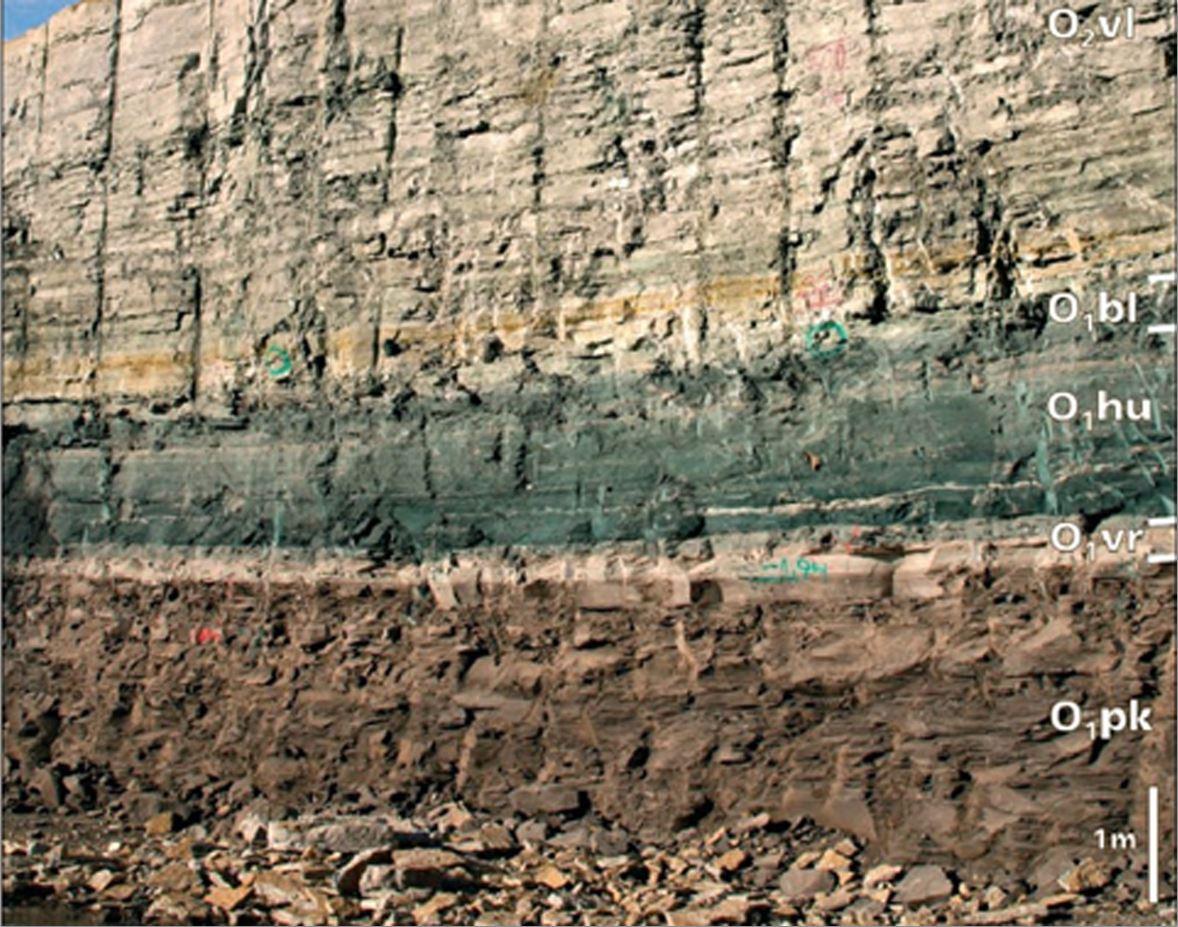 Alam- ja kesk-ordoviitsiumi kivimite läbilõige Tallinnas Kadriorus. Märkus: O1pk – graptoliitargilliit (Pakerordi lade); O1vr – kiltsavi (Varangu lade); O1hu+bl – glaukoniitliivakivi (Hunnebergi ja Billingeni lade); O2vl – glaukoniidirikas lubjakivi (Volhovi lade). Allikas: TTÜ Mäeinstituut